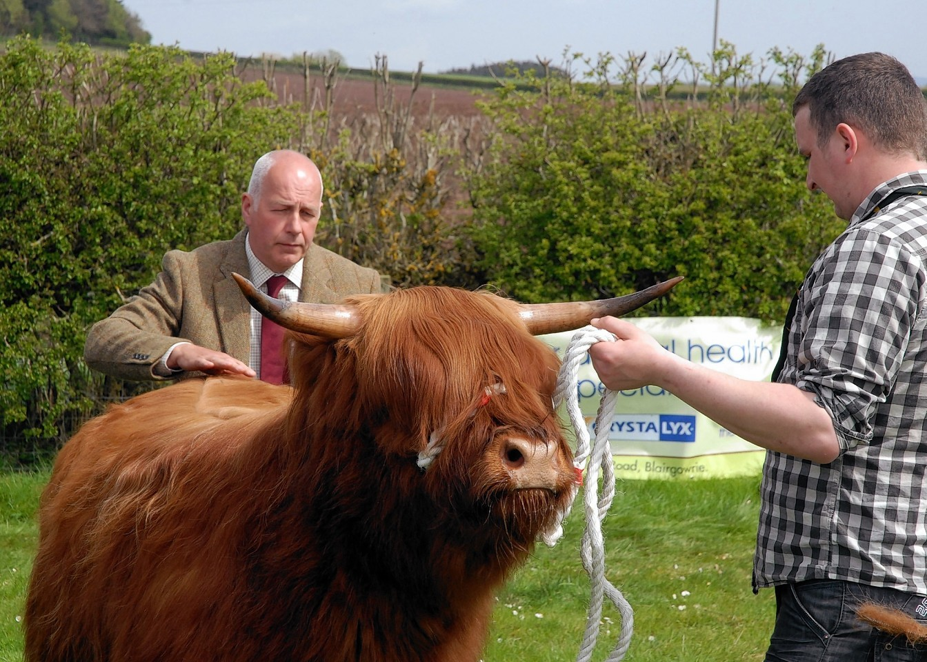 First prize for Angus the bull at the Highland Show