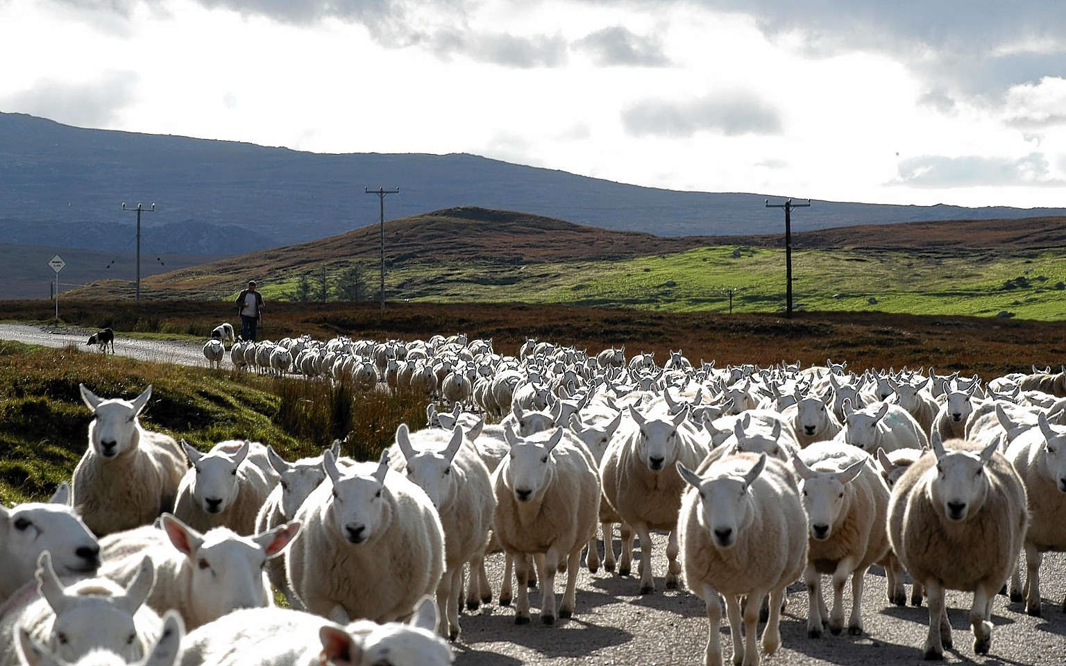 Crofters must complete their census forms by April 7