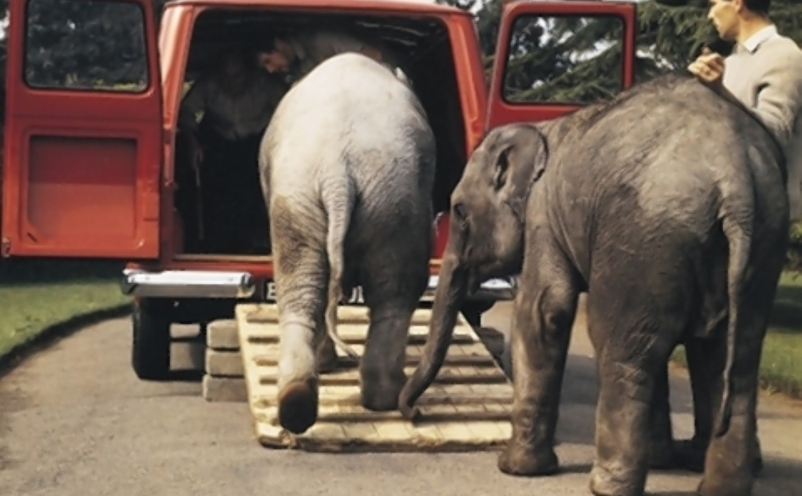 London Zoo keepers using a Transit van in 1965 to move two elephant calves as the model is approaching its 50th anniversary