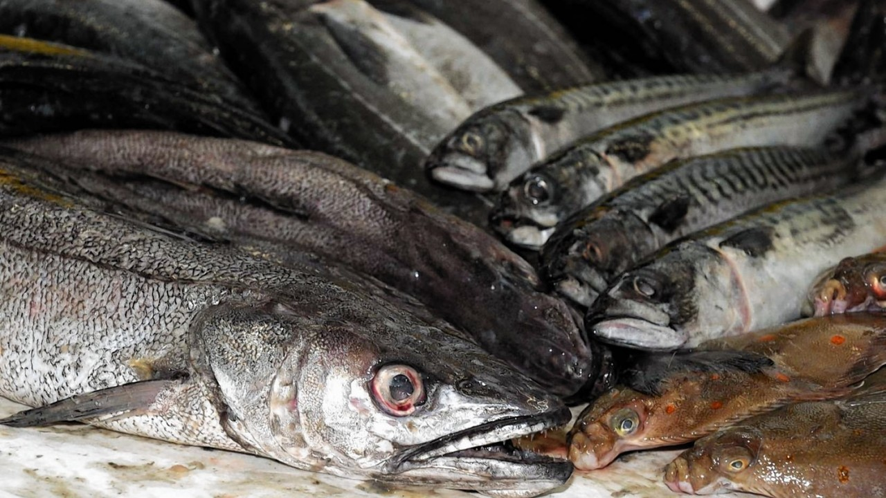 """Glasgow scientists explore if overfishing is changing the """"evolution"""" of sea creatures"""