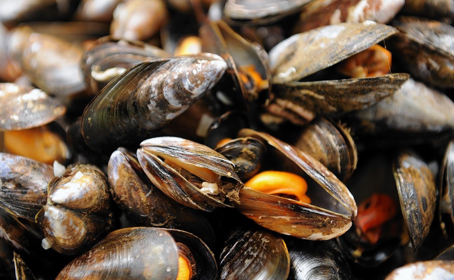Scottish mussels