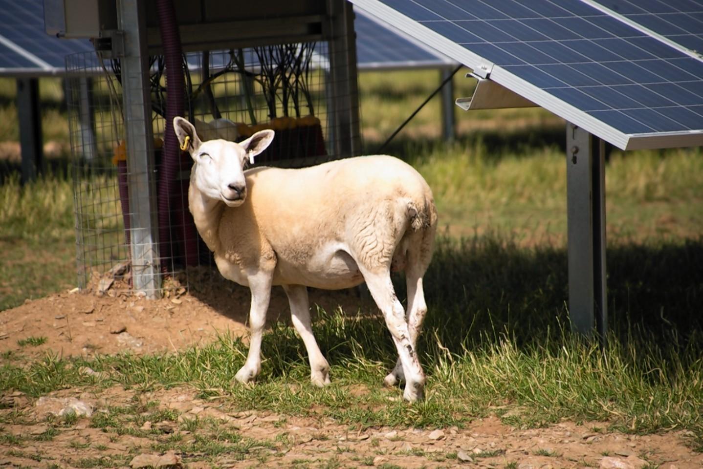 A solar farm could be built near Crimond