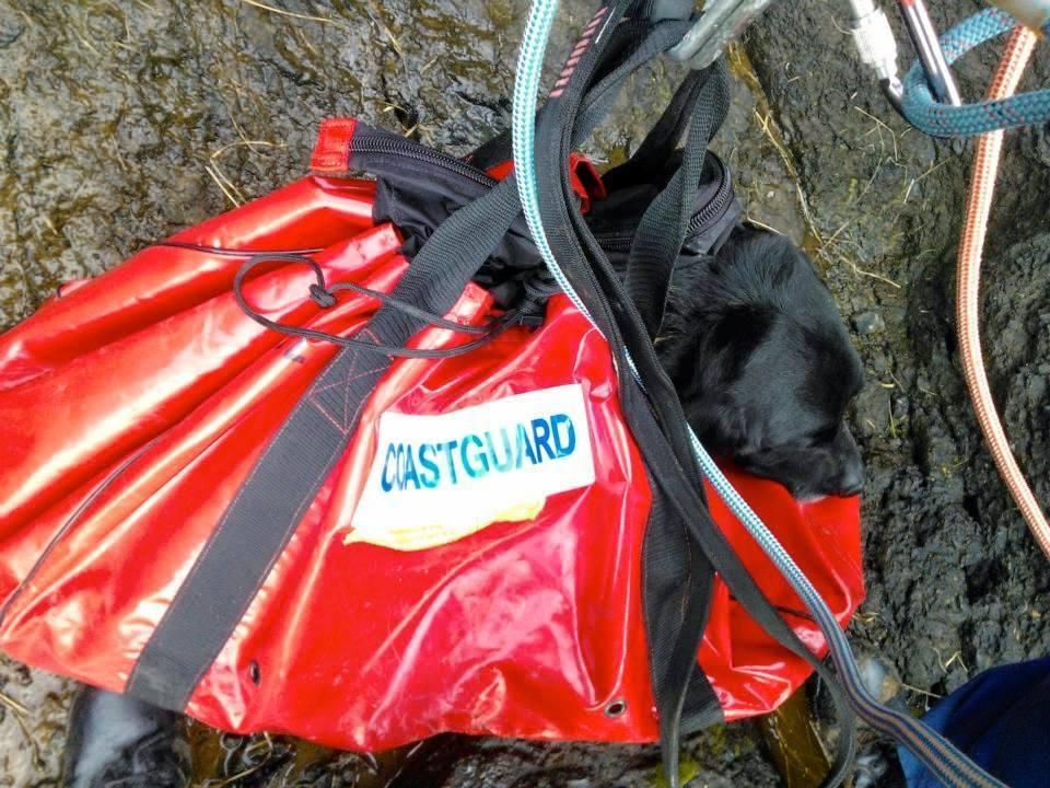 Winston the dog in the coastguard's rescue bag