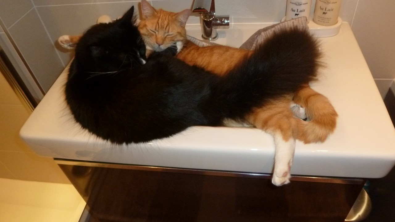 How many cats can you fit in a sink? Two by the look of it. Here are Alfie and Jasper who are constantly amusing their owners, Bruce and Yvonne Bremner of Inverurie.