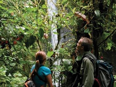 In the jungle near the Mashpi Lodge, Ecuador