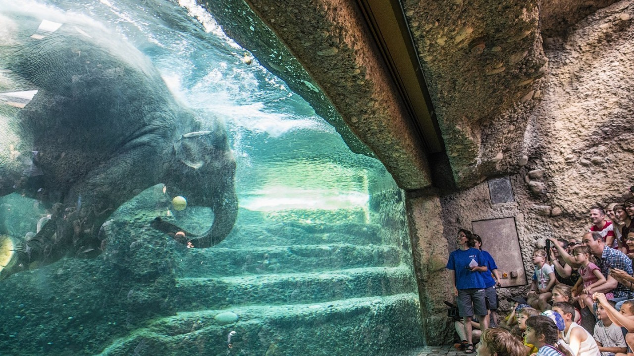 Visitors watch an elephant bathing in the newly opened elephant park in the Zurich Zoo in Zurich, Switzerland, Sunday,June 8. 2014. After three years of construction the new elephant park ''Kaeng Krachan'' opened to the visitors this year. On 11, 000 square meters the new park provides a spacious living area for the six elephants of the Zurich Zoo.