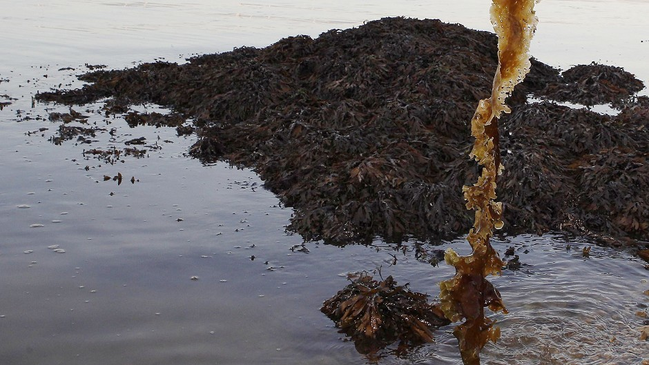 Fishing for seaweed could be a diversification opportunity in Highland waters