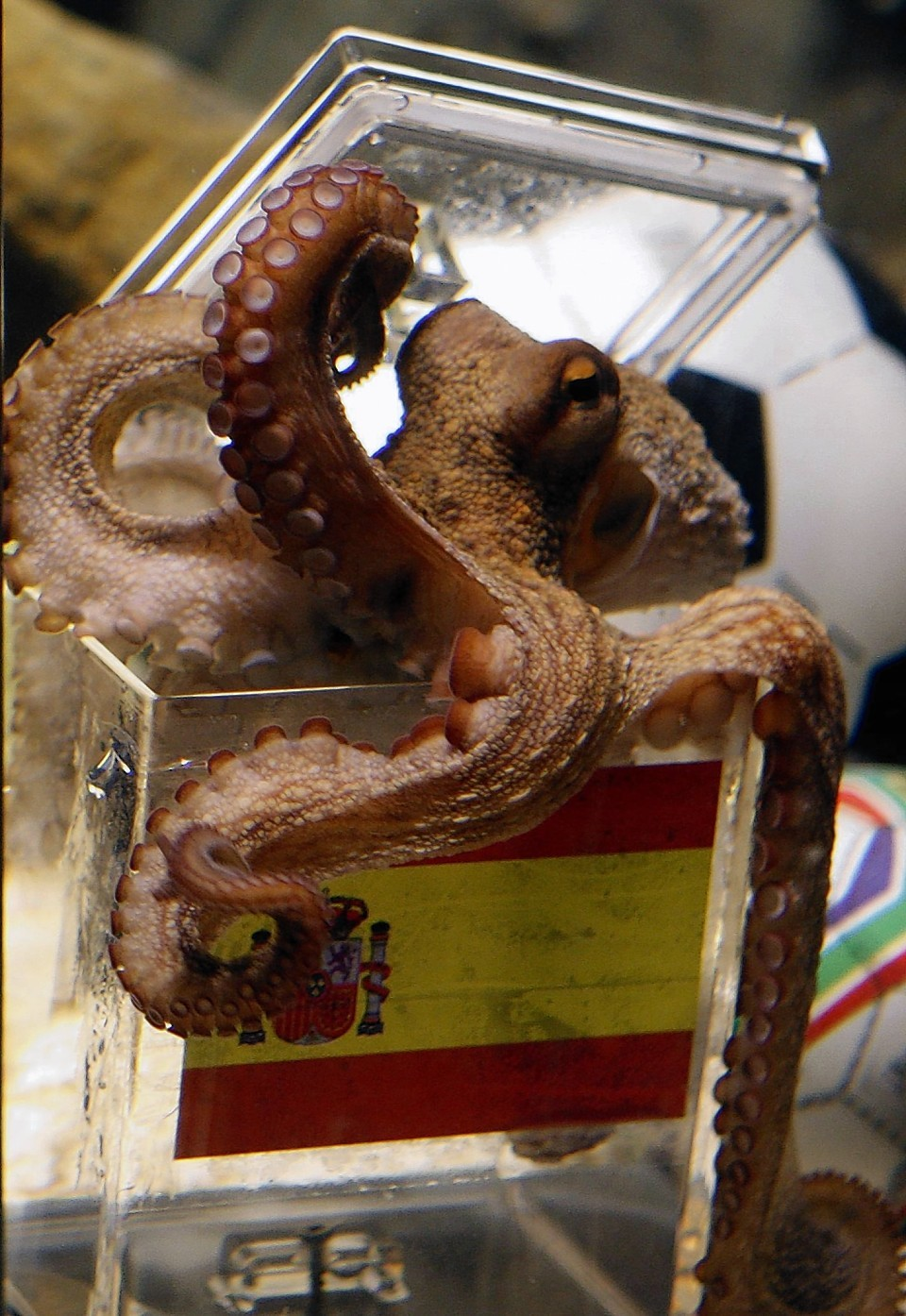 Paul the octopus got the World Cup winner right in 2010