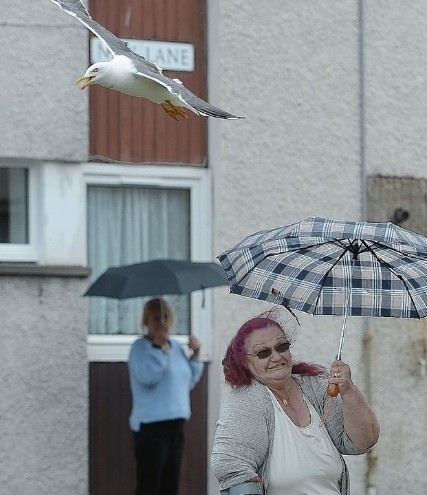 Scots residents in a quiet Edinburgh street told how they have to venture out with umbrellas to protect themselves from a daily onslaught of dive-bombing seagulls