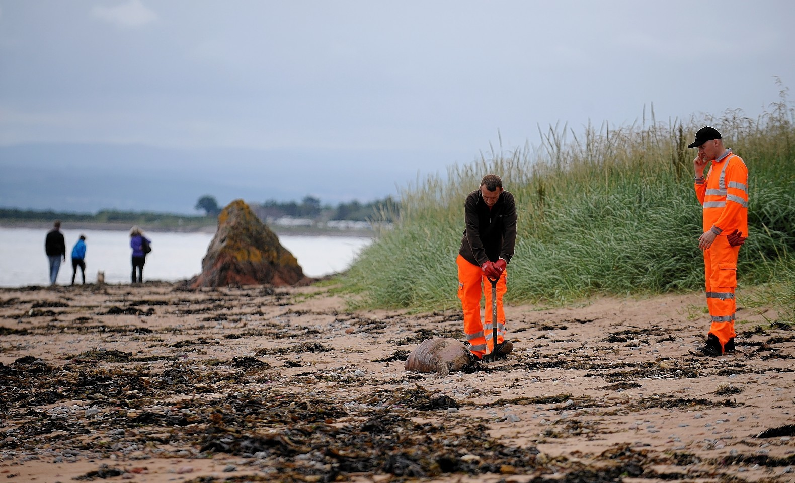 Men clear the headless seal carcusses from Rosemarkie Beach