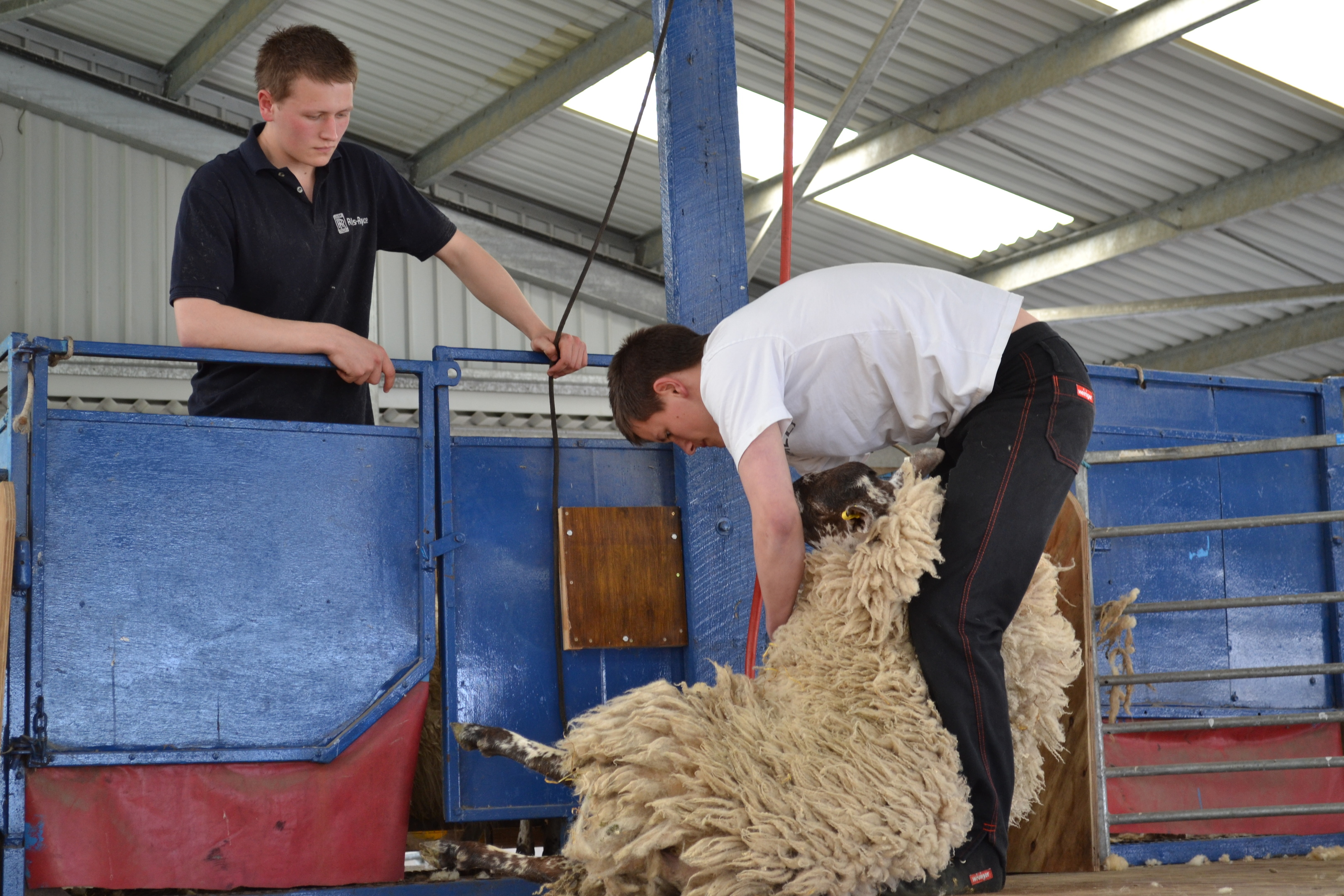 Wool prices are set to be up on last year