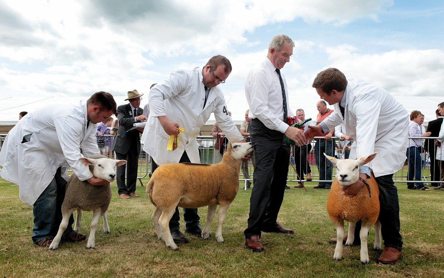 Sheep being shown at this year's Royal Highland Show