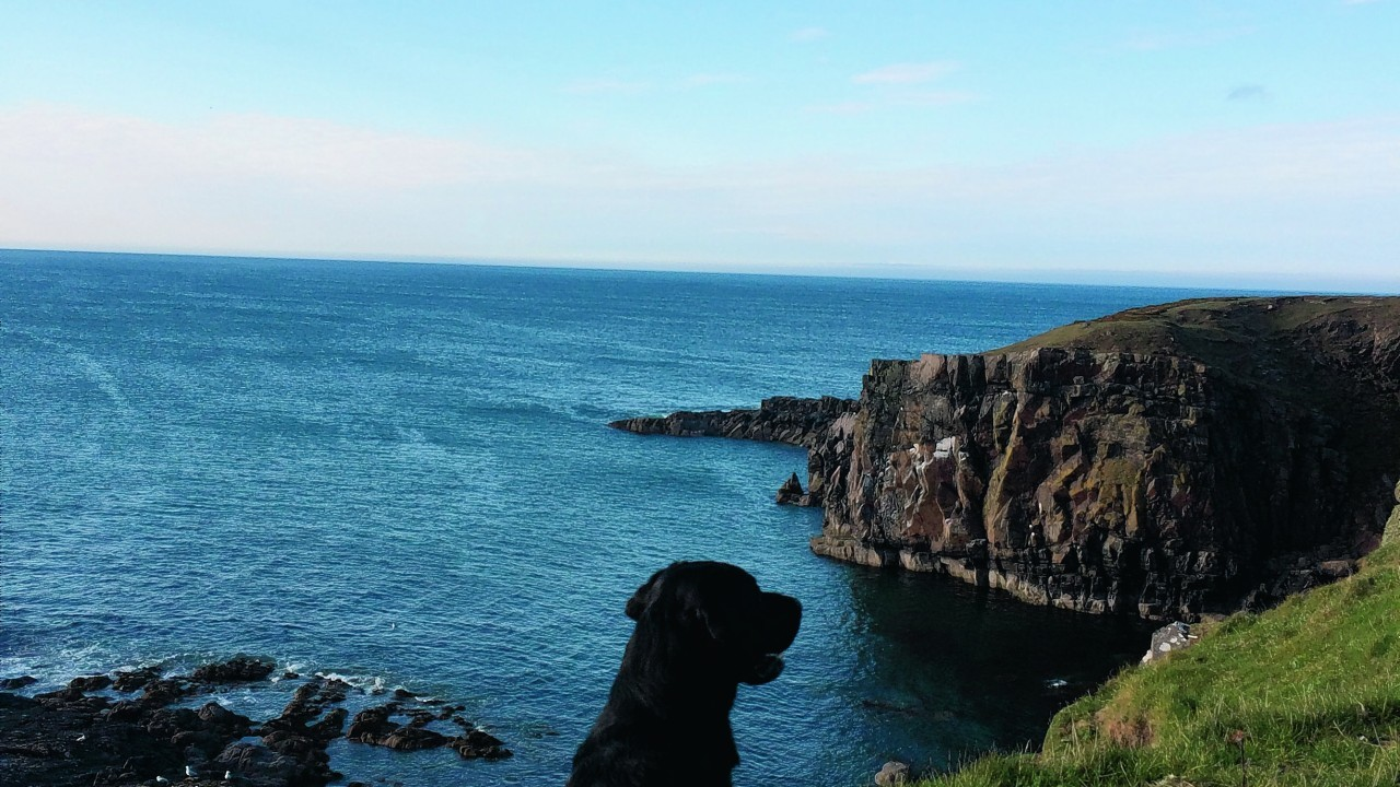 Alfie looking over western rocks between Aberdour beach and Rosehearty. He lives with Elaine Sim in Rosehearty.