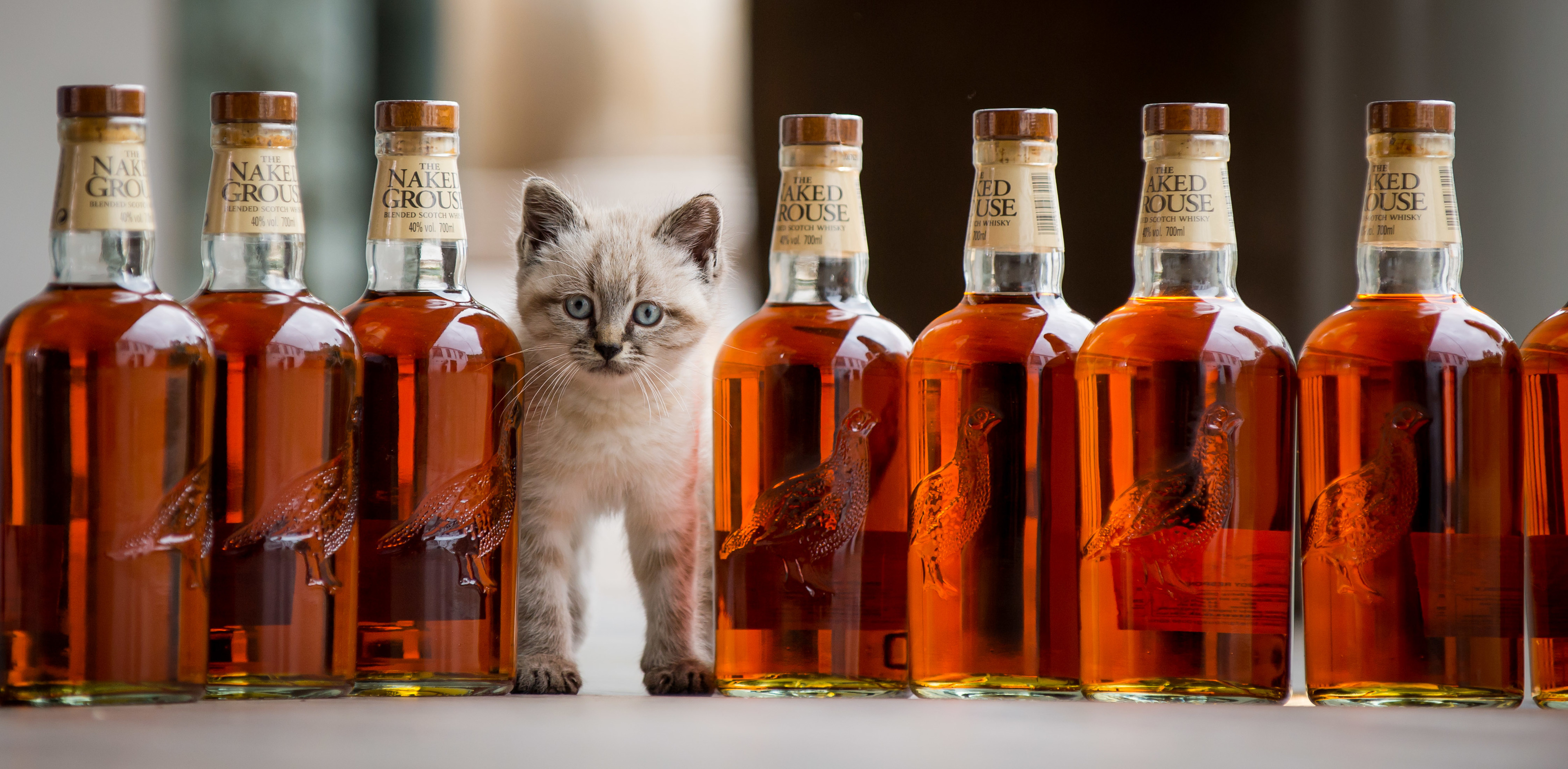 Peat was the official mouser at The Famous Grouse Experience, at Glenturret Distillery.