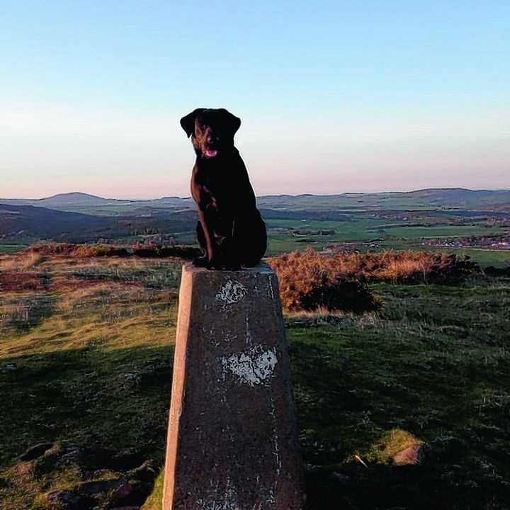 Here is Bella the 10 month old black lab at the top of the Clashmach Hill. She last featured in the Press and Journal when she was 10 weeks old. She lives with Elaine Young from Huntly.