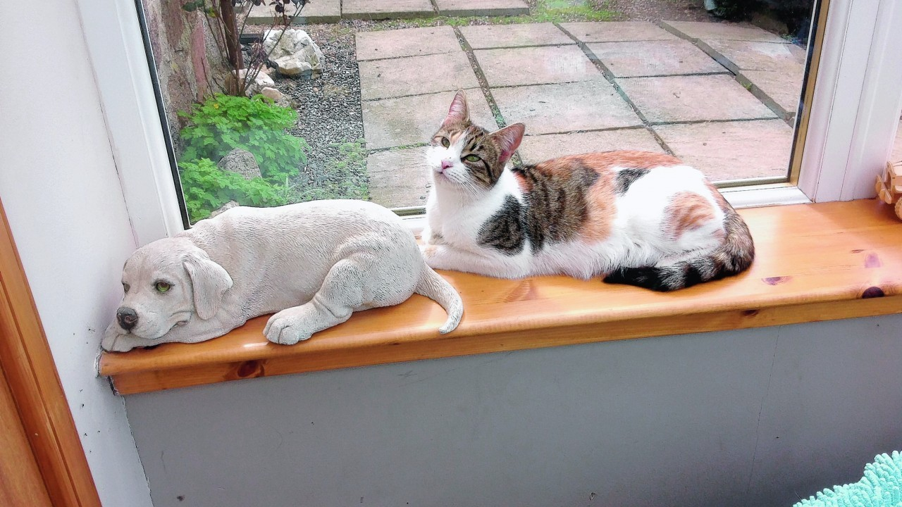 Beanz the cat trying to be a dog. She lives with Zoe, Jimmy and Ali at Craigievar.