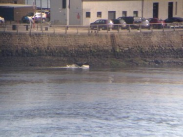 Cow water in Aberdeen Harbour. Picture credit: Fraser Graham, Twitter
