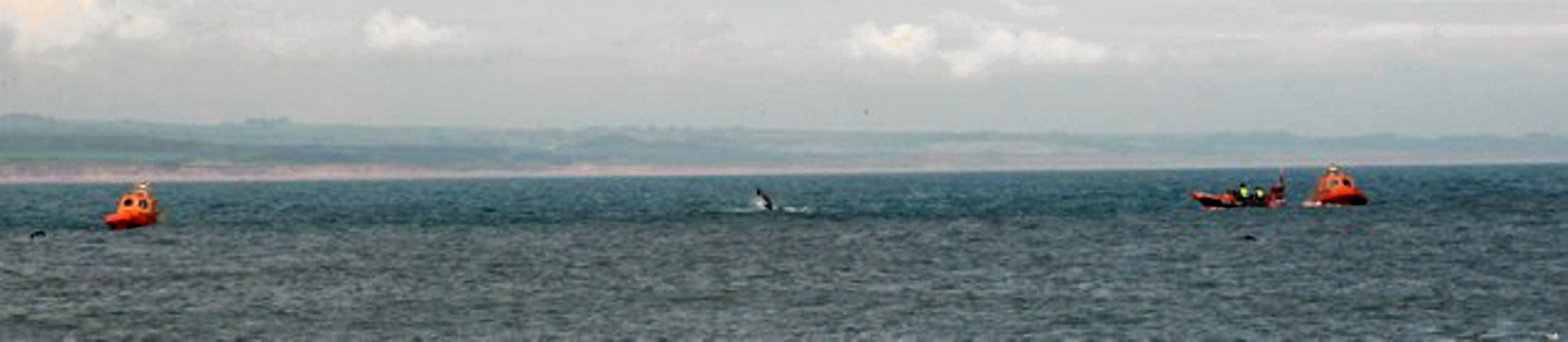 The alert comes as Aberdeen-based North Star Shipping denied claims its vessels were spotted harassing dolphins