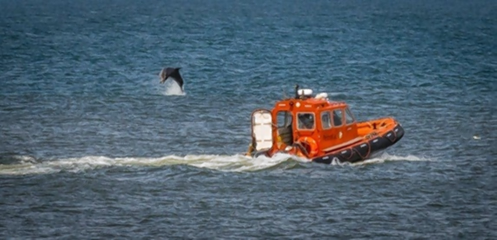 The alert comes as Aberdeen-based North Star Shipping denied claims its vessels were spotted harassing dolphins. Picture by Jeannette Baxendale