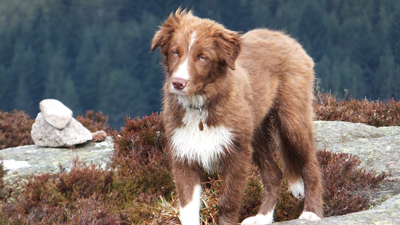 Meet our winner this week. Here is Fergie on the Don View Walk near Bennachie. Fergie lives with the Moir family in Kemnay.