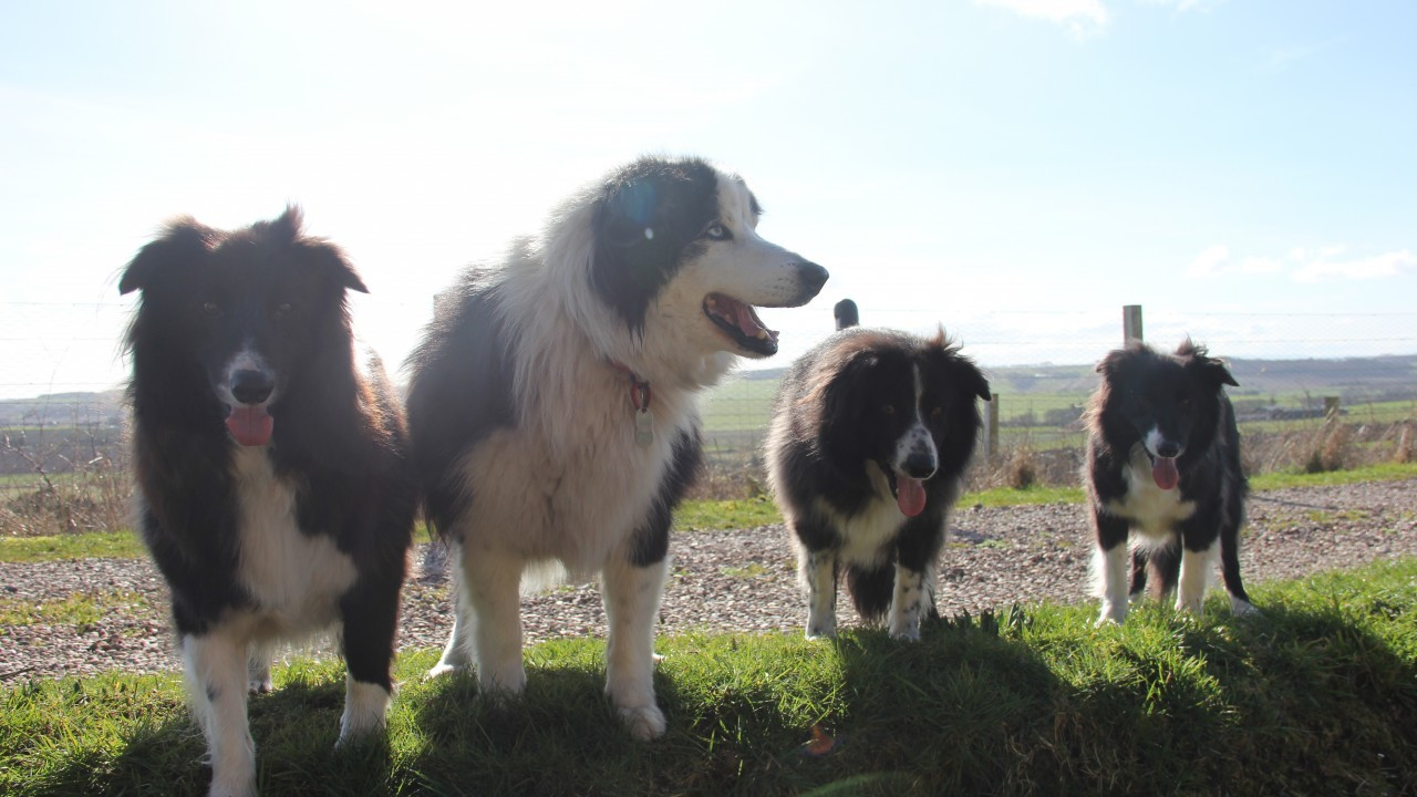 Five year old Speckle, Dave and Jump are all brothers and Patch is almost 13 and moved from  Mrs Murray's Dog and Cat home two years ago. They all live with Avril Reid and Michael Matthew at Strichen.