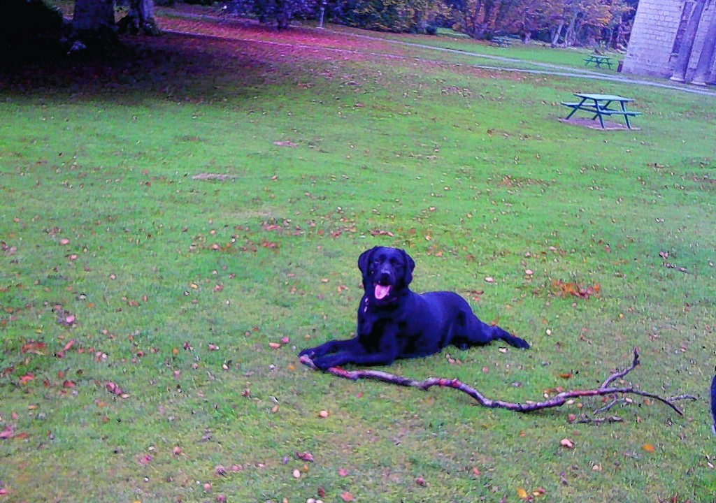 Here is Sophie having fun at Aden Country Park, Mintlaw. She lives with Ron and Joan at Fraserburgh.