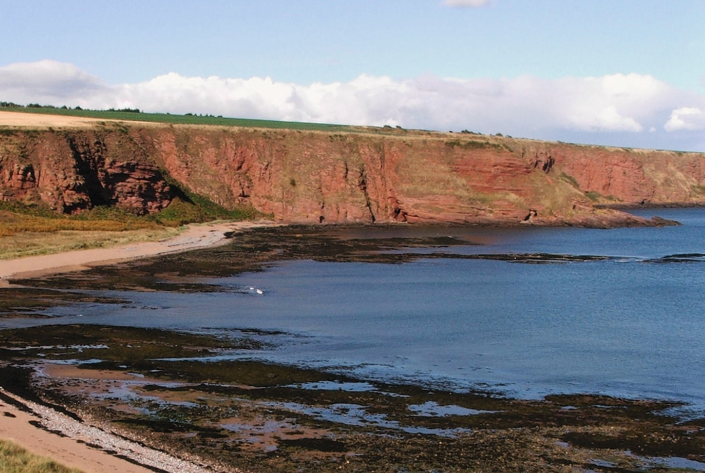 The skull was found floating seven miles off the coast of Arbroath.