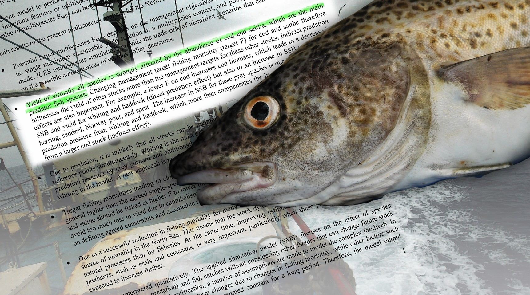 Fish stocks will be in the spotlight at 2016 event