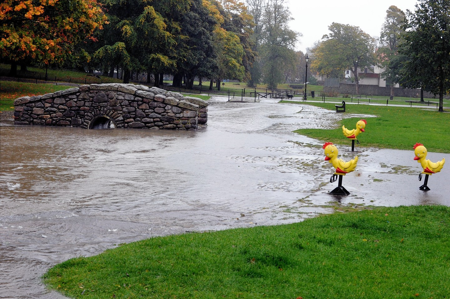 The ducks of Westburn Park