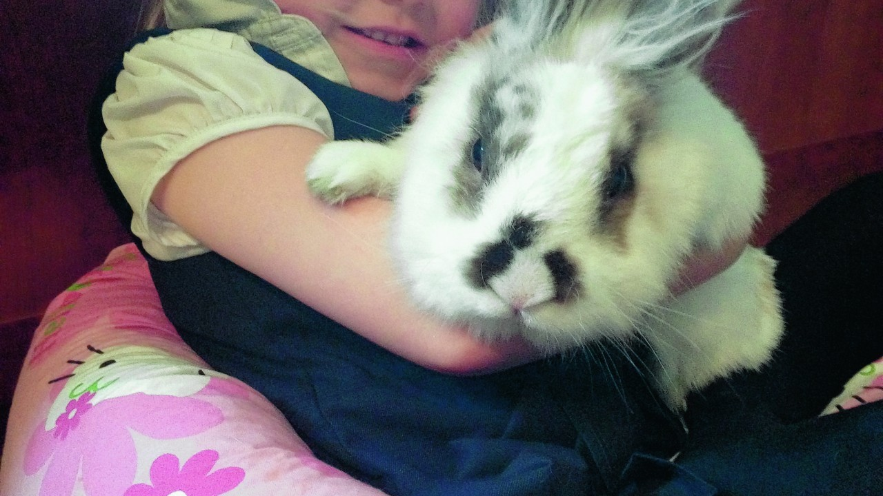 Fluffy rabbit Stu loves it when his owner Ellie plays with him and likes to chill out with her on her bean bag at their home in Mintlaw. He said Ellie takes very good care of him.