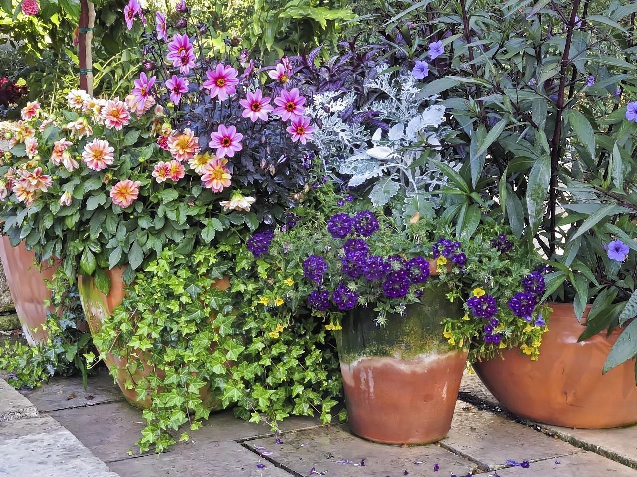Pot-plants-in-a-garden