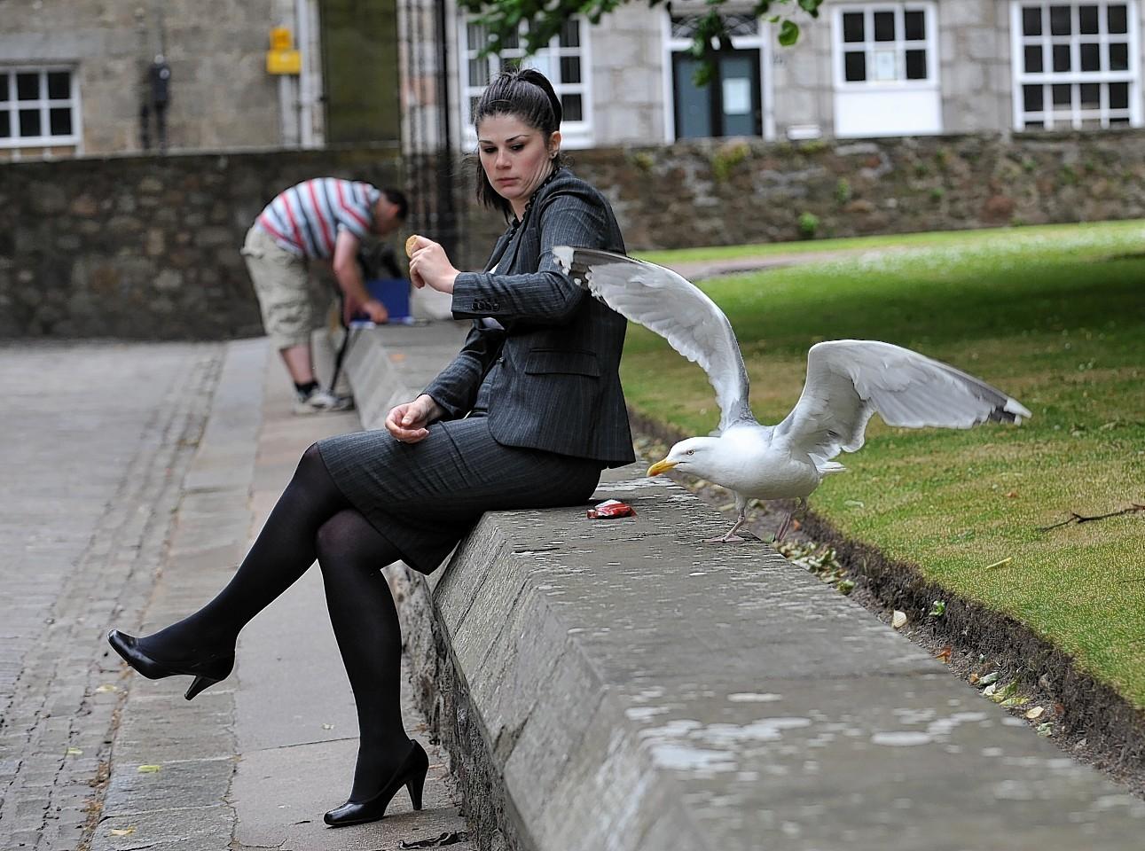 Aberdeen gulls
