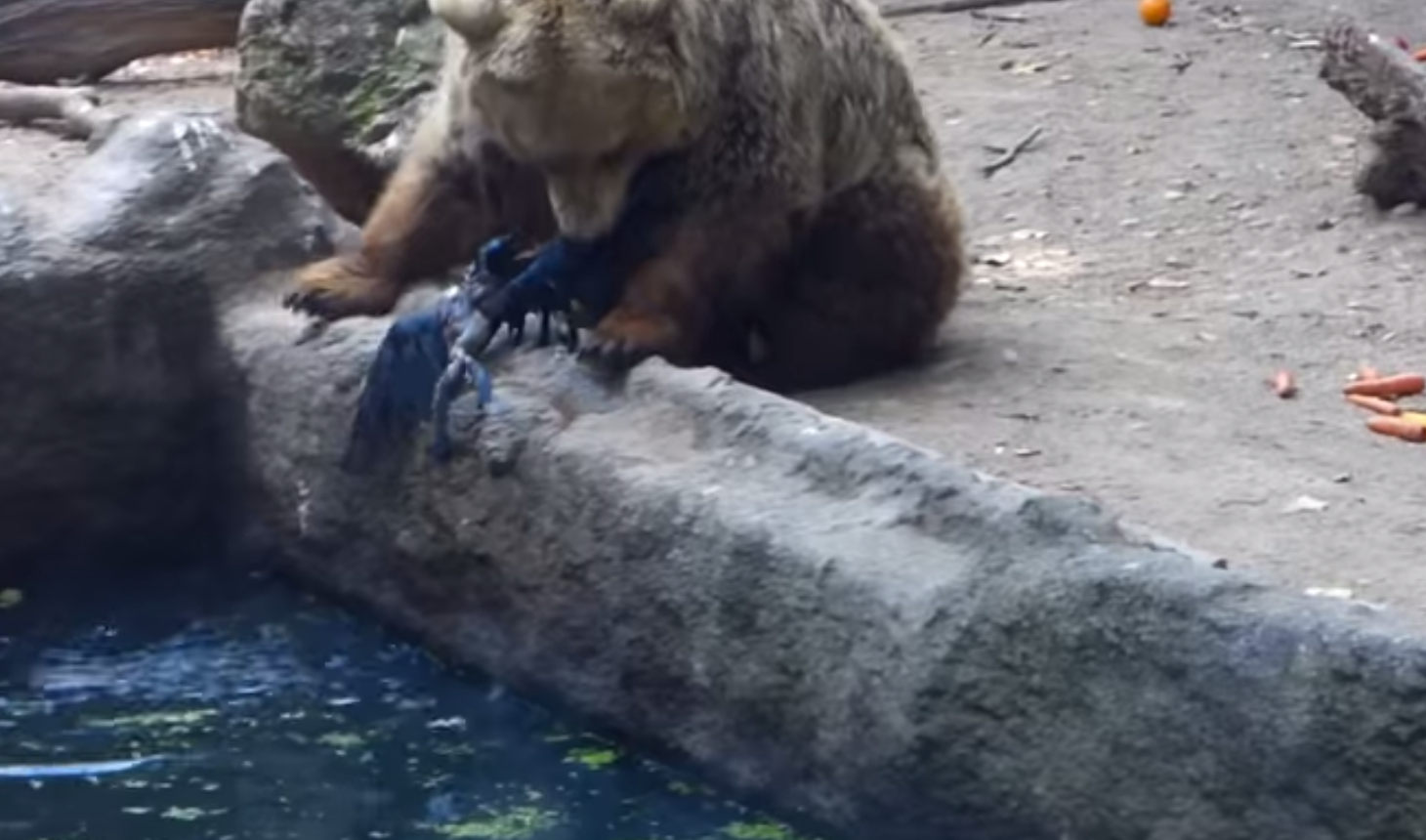 Bear brings bird to safety at a zoo in Budapest