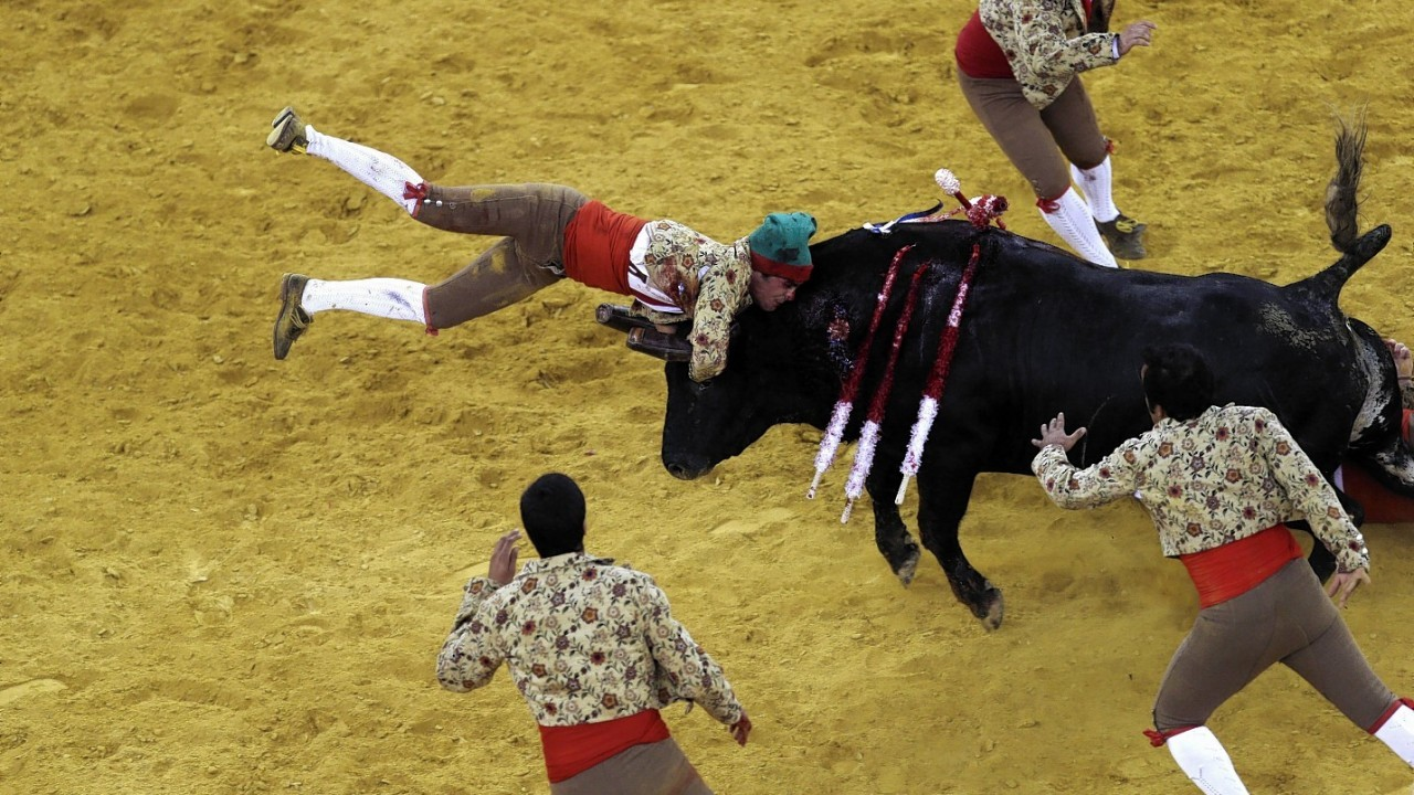 A Portuguese forcado of the group of Alcochete catches a bull during a Portuguese-style bullfight in Campo Pequeno bullring, in Lisbon, Thursday, Aug. 21, 2014