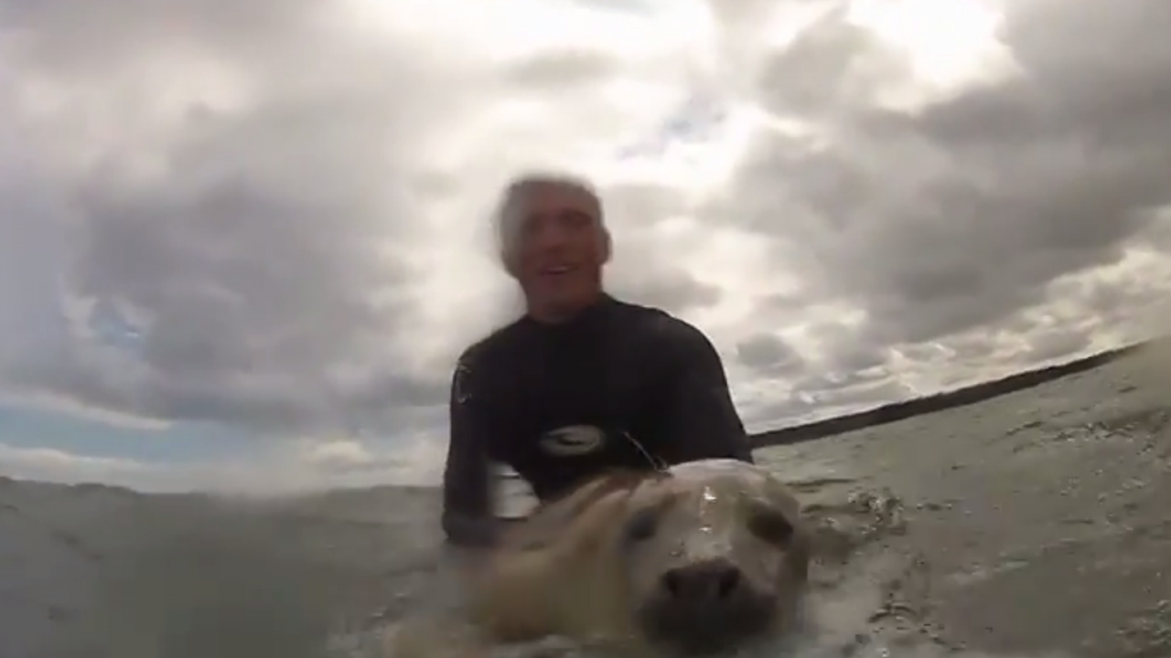 Surfing gets a seal of approval