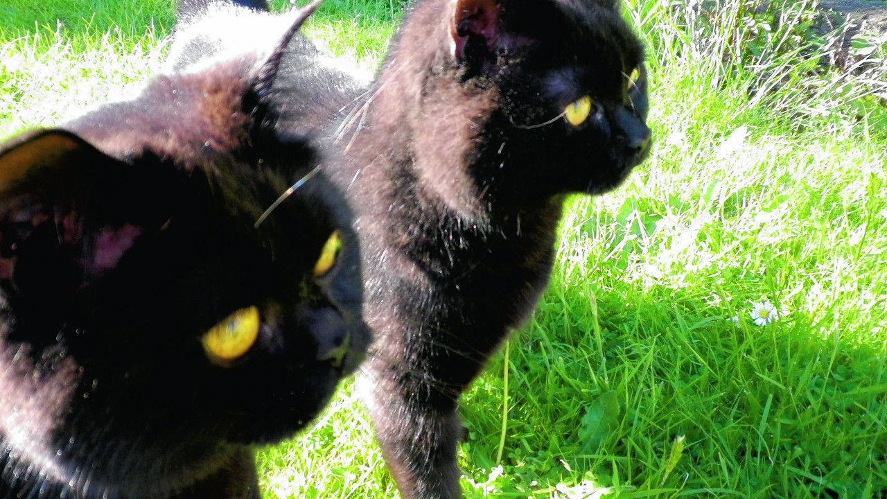 Brothers Hugo and Sooty live with Caroline Jardine in Forres.