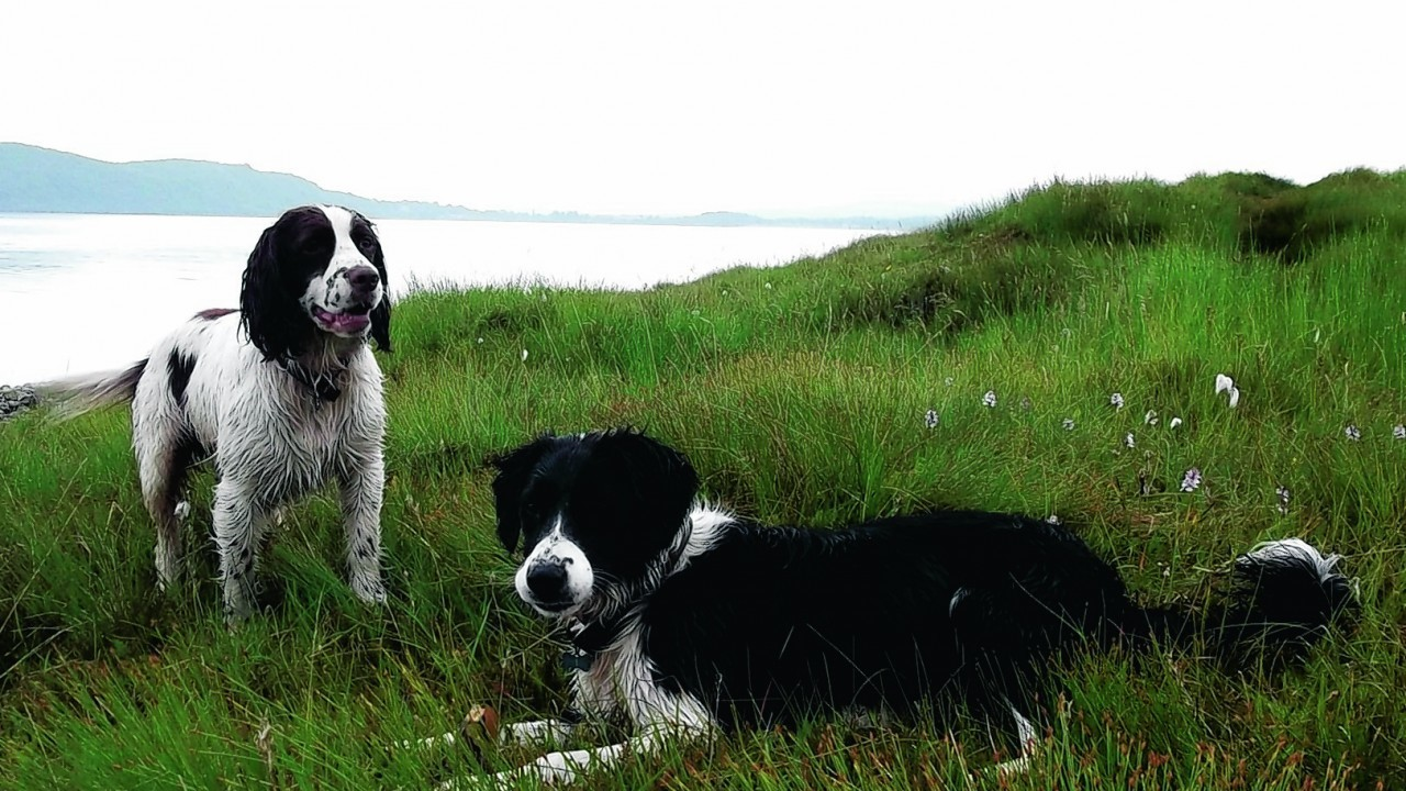 Mud magnet Murphy and Pip the Sprollie live with George and Gabriella McKenzie in Connel.