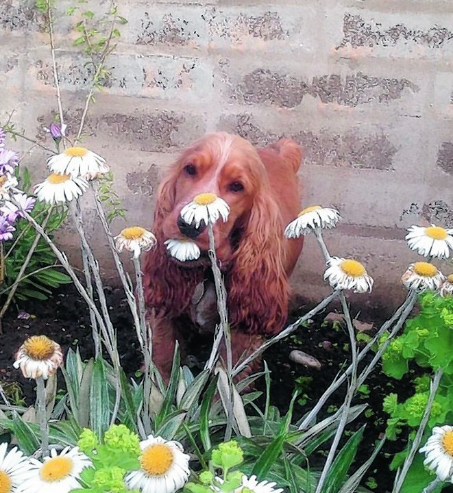Buddy trying to destroy evidence after sabotaging his mother Marion Relfs' flowers in Macduff