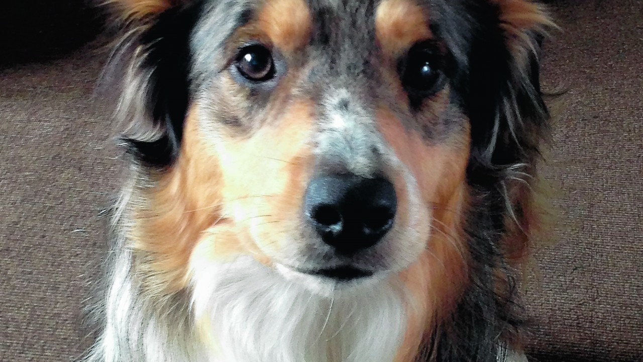 Bandit is one-and-a-half years old and lives with Shaun Macleod in Banff.