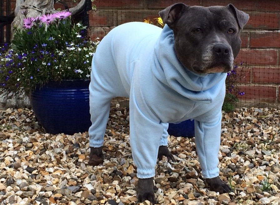 1 Star - who suffers from pollen allergies, in her lightweight CleanCoat - dogs in onesies