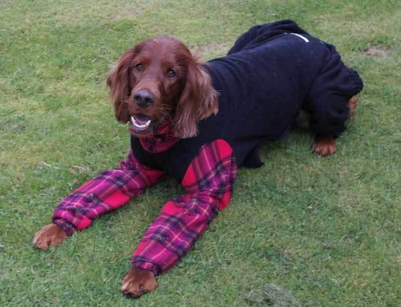 3-Chloe - dogs in onesies