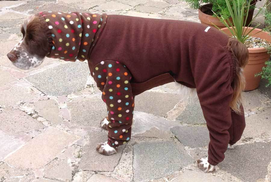Baxter-3 - dogs in onesies