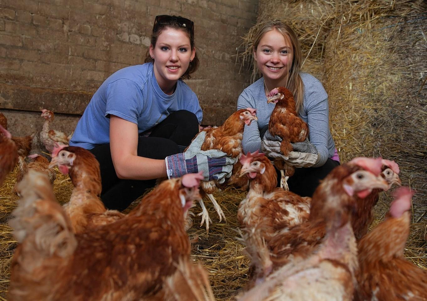 Chicken-St-Andrews.jpg