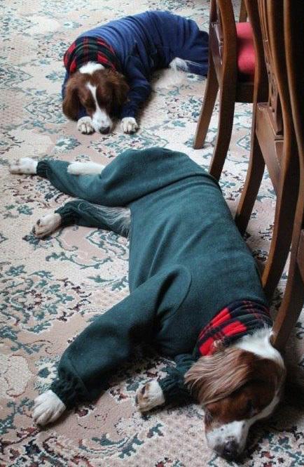 Fast-asleep-in-our-jammies - dogs in onesies
