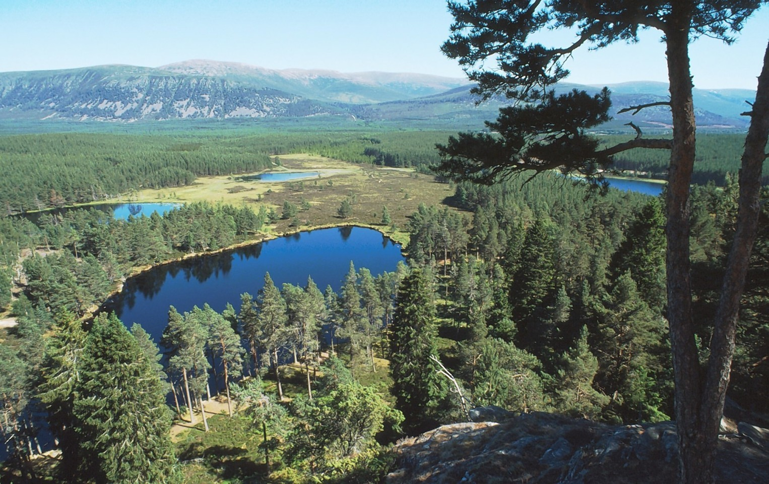 Plans are being drawn up to improve tourist provision at Glenmore