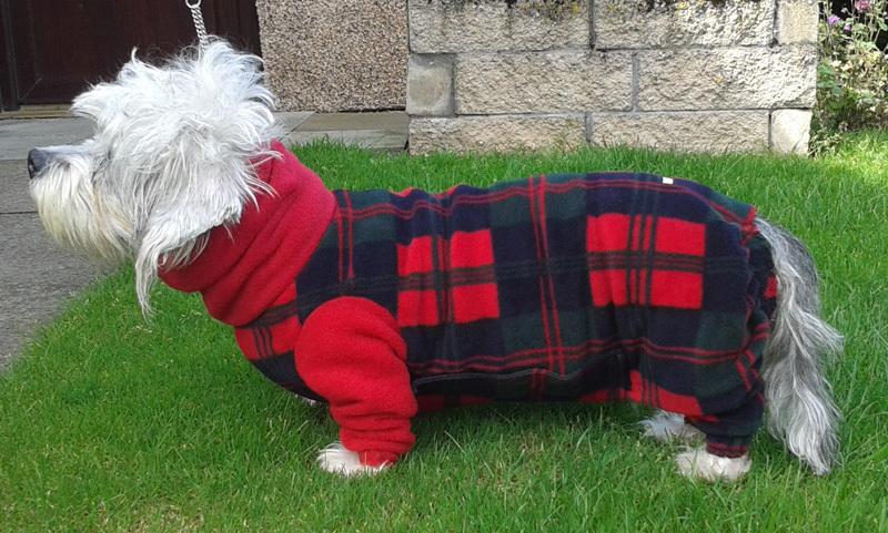 Phoebe - dogs in onesies