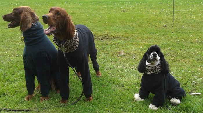 Poles-apart - dogs in onesies