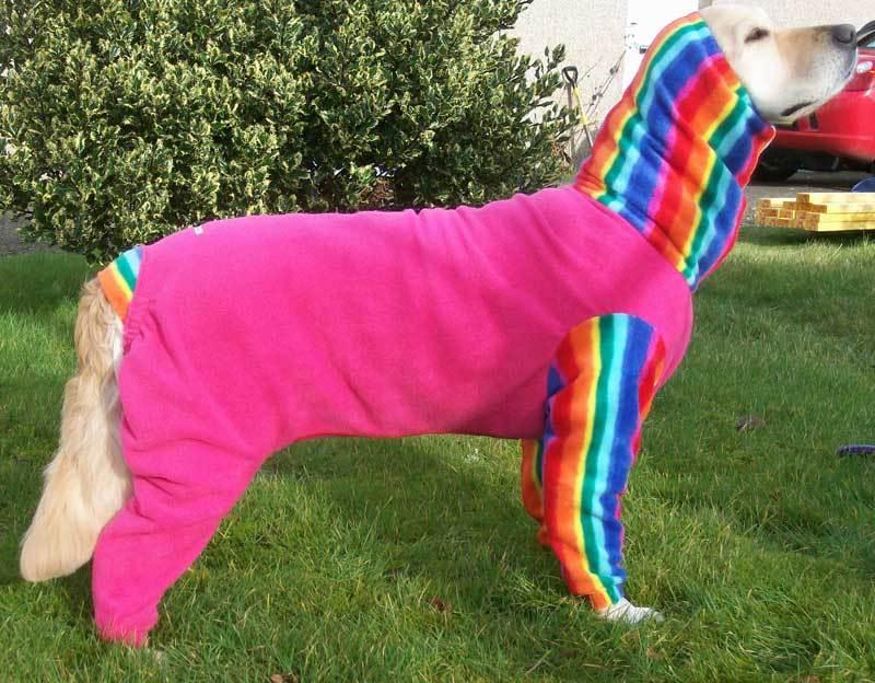 Roxy - dogs in onesies