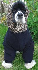 Toto-leopard-skin-sitting - dogs in onesies