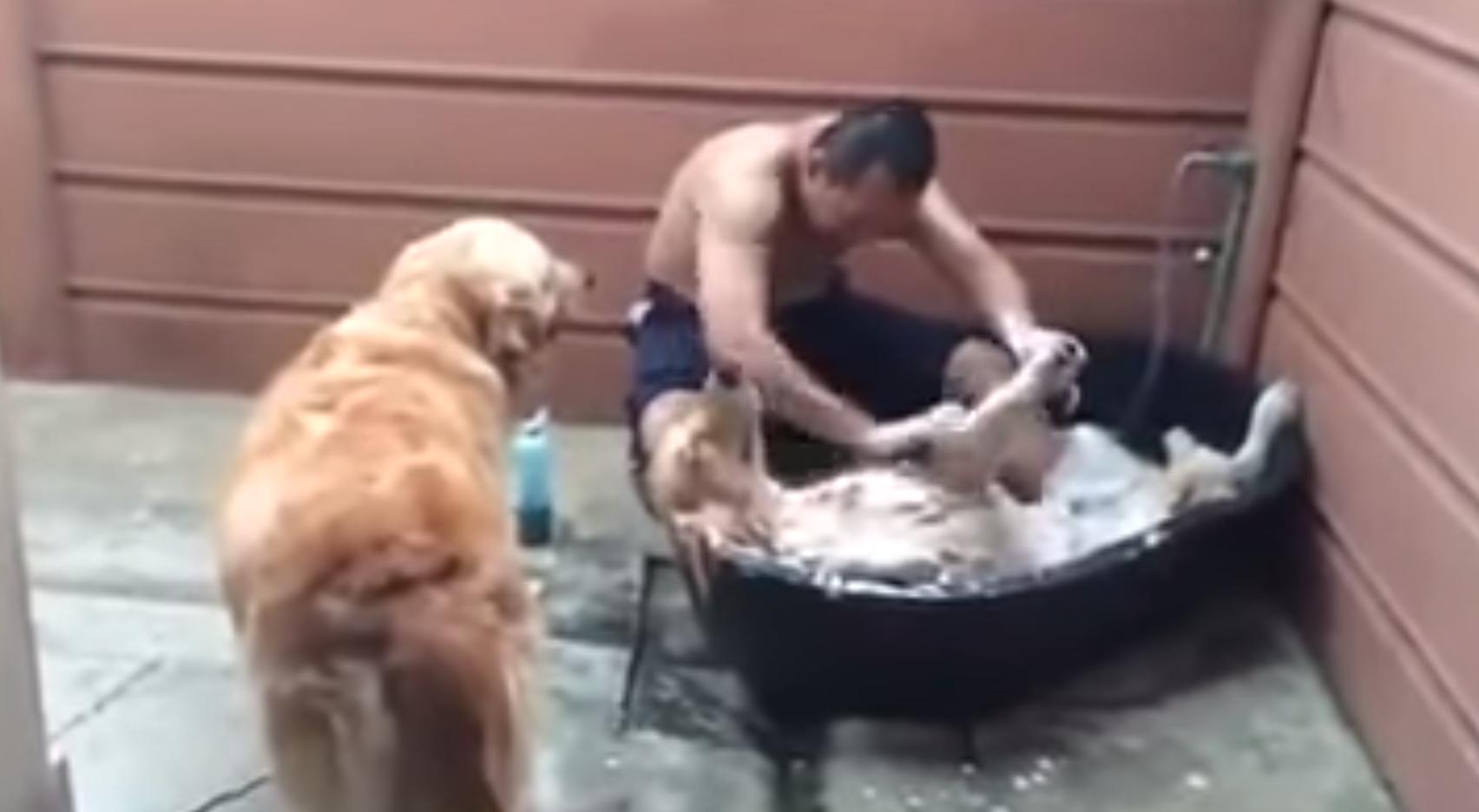 This dog is sure enjoying its bath
